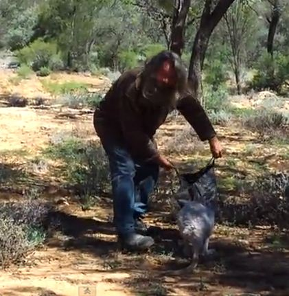 Kangaroo Catching