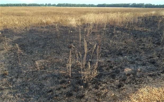 Scorched earth - (Pic. Christopher Miller The Telegraph)